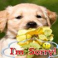 Sorry 11